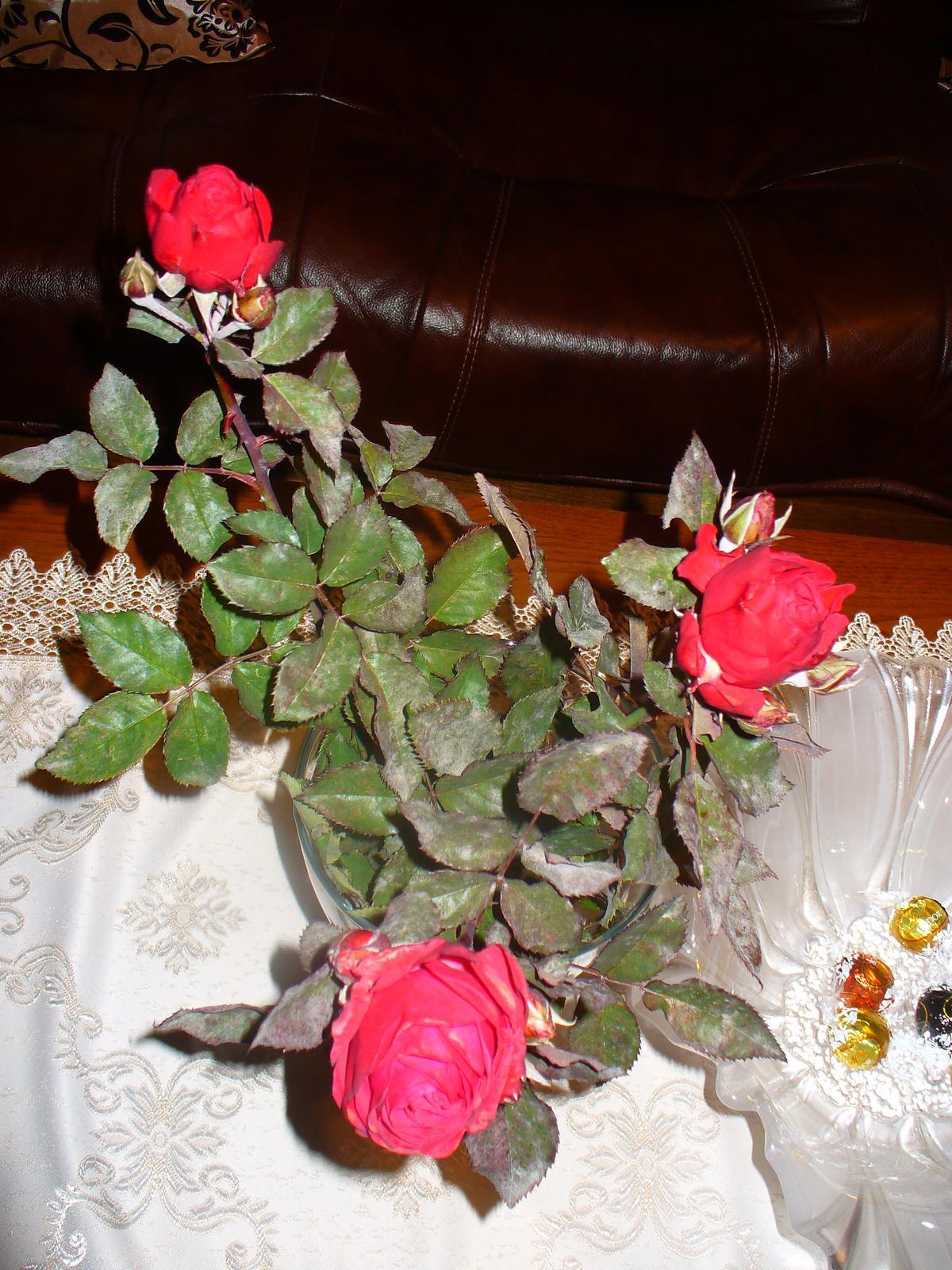 Dnes som odrezala posledné moje ruže :) - Obrázok č. 1