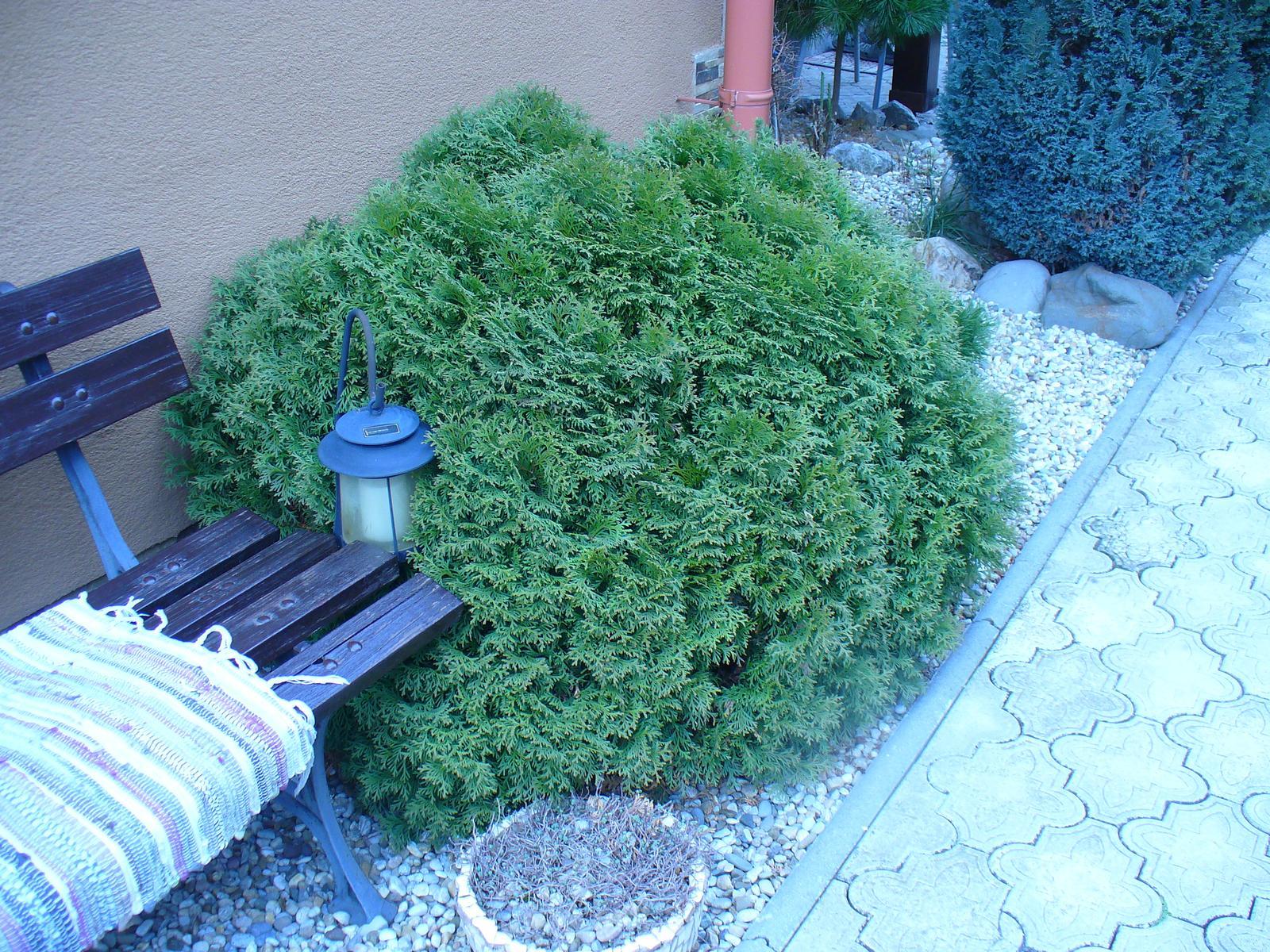 Prerábka, sadenie a úpravy v našej mini záhradke. - Aj táto krásna guľa musela ísť preč, tiež sa moc rozrástla a vo vnútri je celá hnedá.
