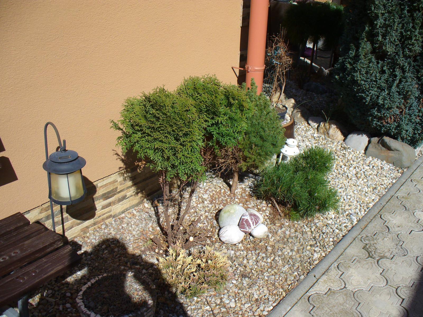 Prerábka, sadenie a úpravy v našej mini záhradke. - z veľkej gule sme nechali 2 výhonky