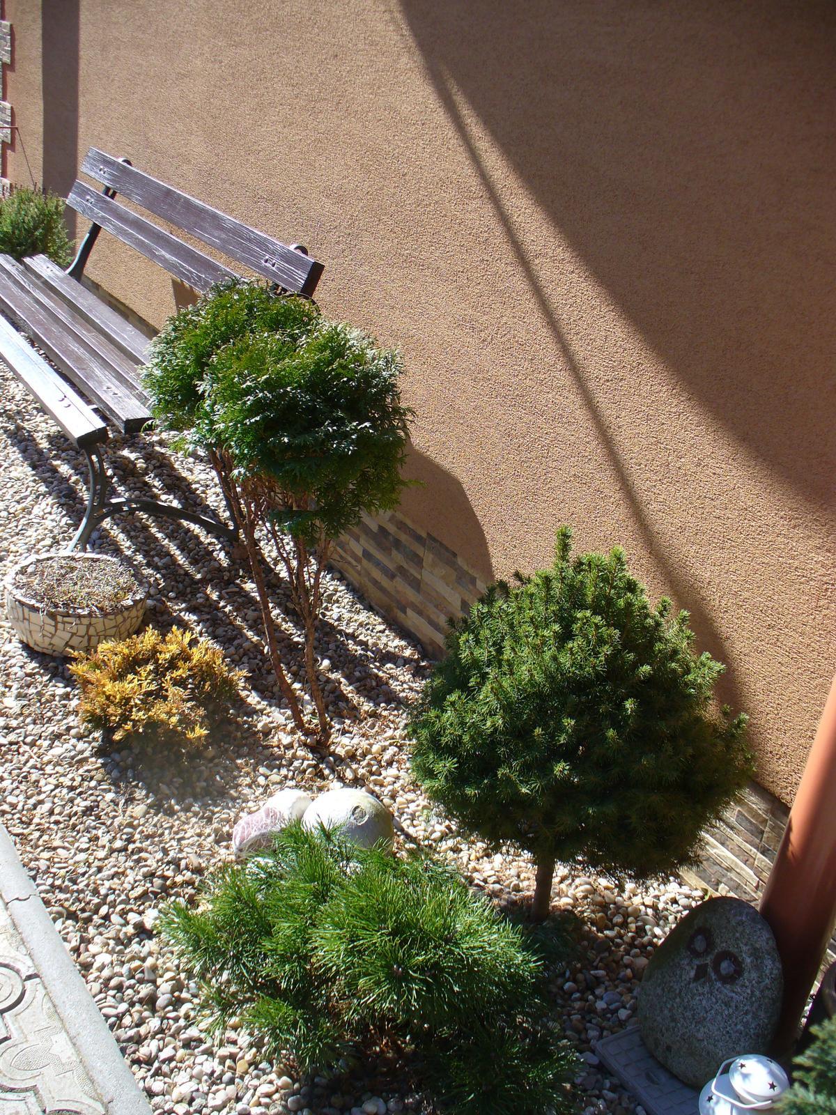 Prerábka, sadenie a úpravy v našej mini záhradke. - tu sú 2 výhonky z veľkej gule a niečo sme dosadili