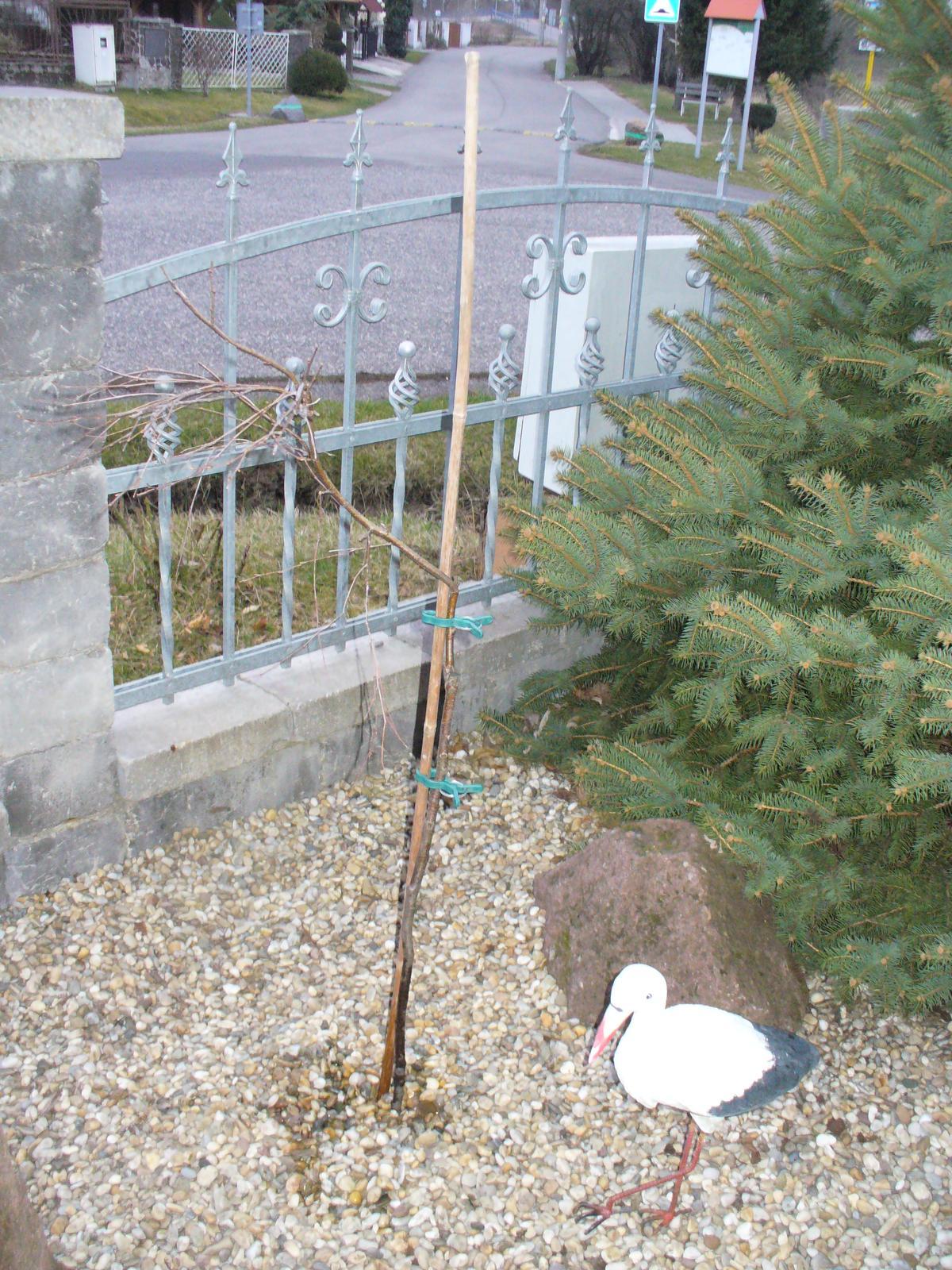 Prerábka, sadenie a úpravy v našej mini záhradke. - Obrázok č. 14