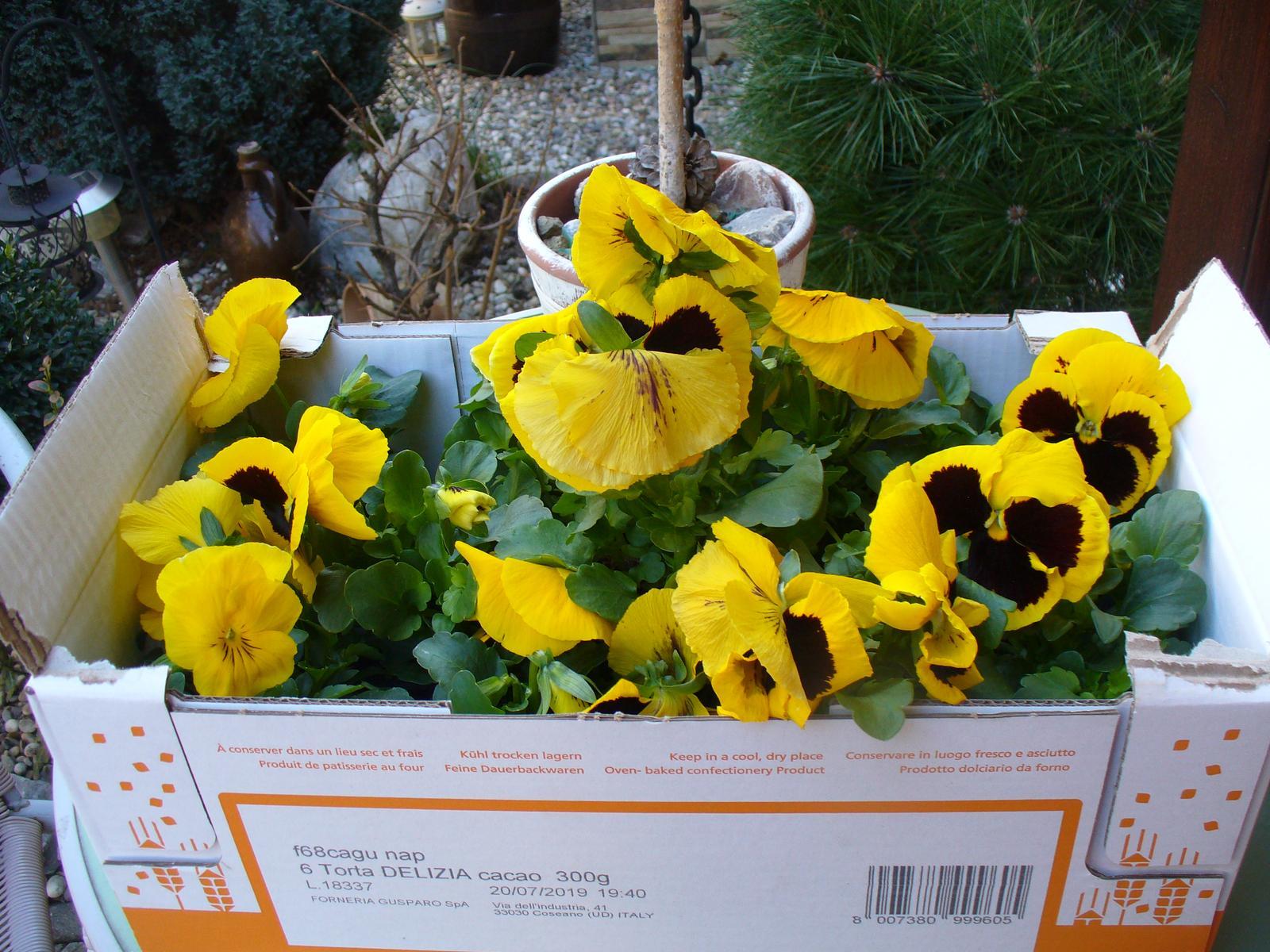 Prerábka, sadenie a úpravy v našej mini záhradke. - nakúpené sirôtky