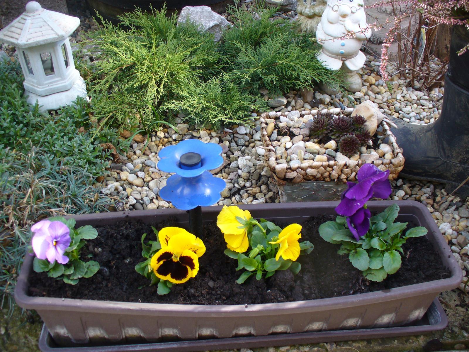 Prerábka, sadenie a úpravy v našej mini záhradke. - aj tu som dala sirôtky