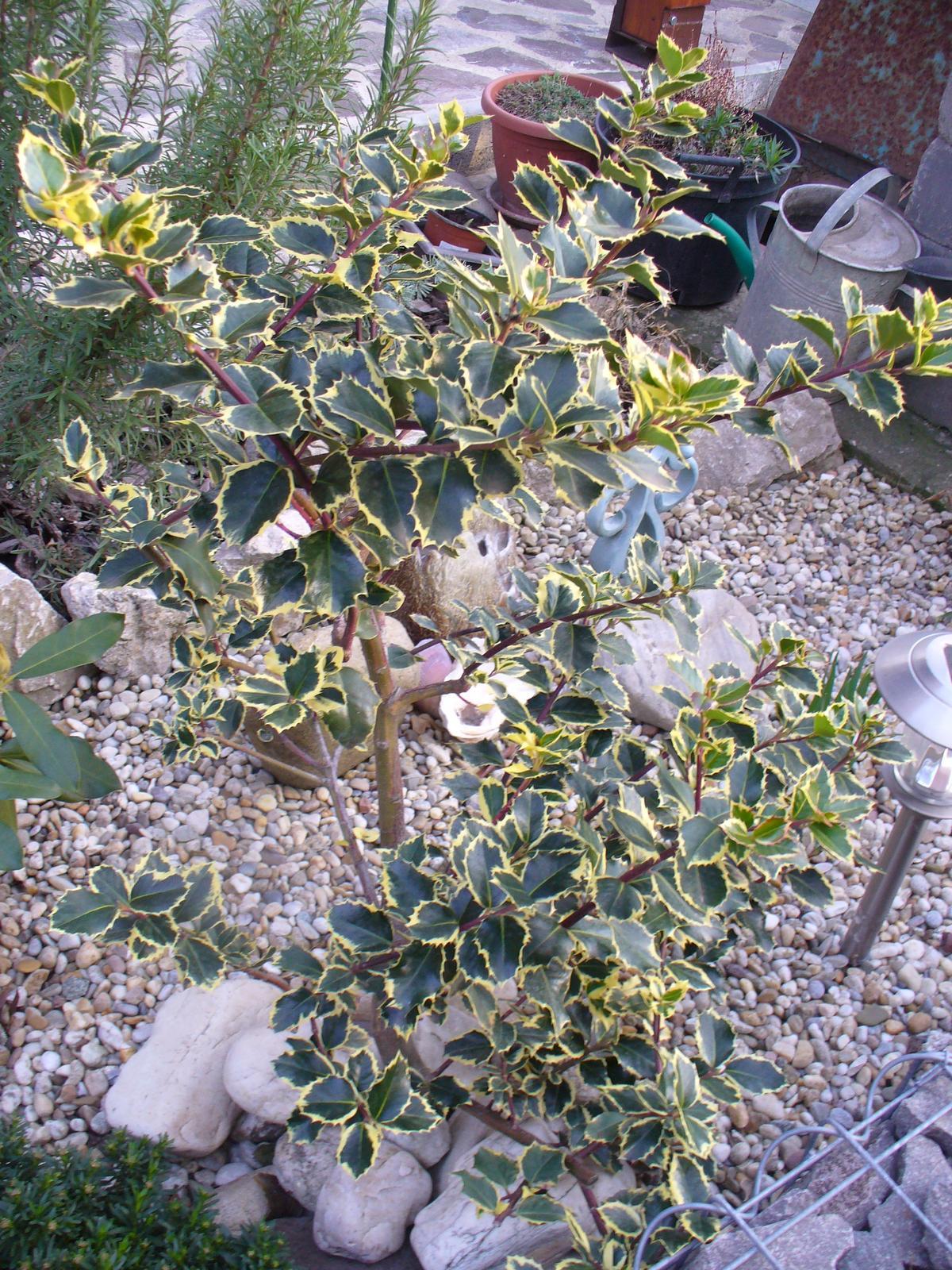 Prerábka, sadenie a úpravy v našej mini záhradke. - Obrázok č. 26