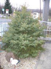 tento bude asi náš vianočný stromček