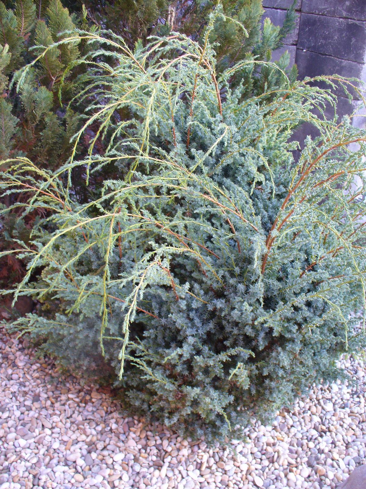 Prerábka, sadenie a úpravy v našej mini záhradke. - Obrázok č. 31