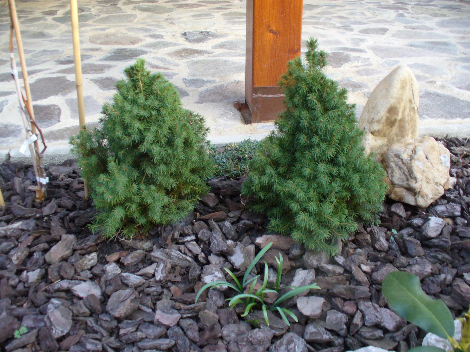 Prerábka, sadenie a úpravy v našej mini záhradke. - Obrázok č. 32