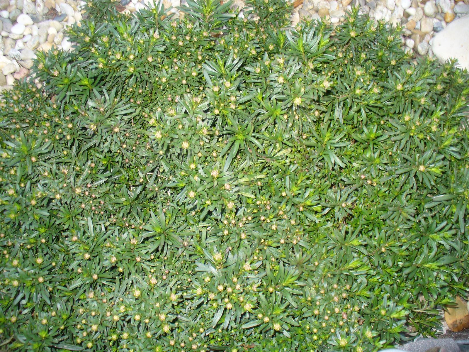 Prerábka, sadenie a úpravy v našej mini záhradke. - Obrázok č. 33