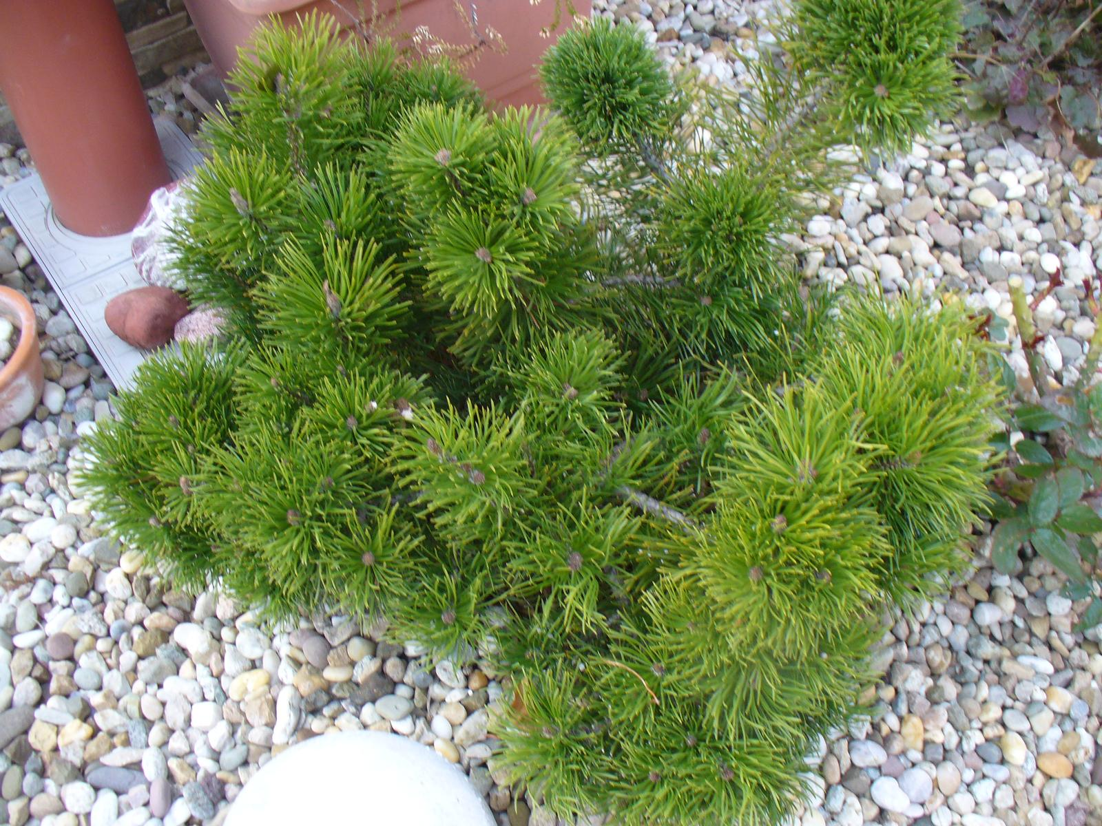 Prerábka, sadenie a úpravy v našej mini záhradke. - Obrázok č. 35