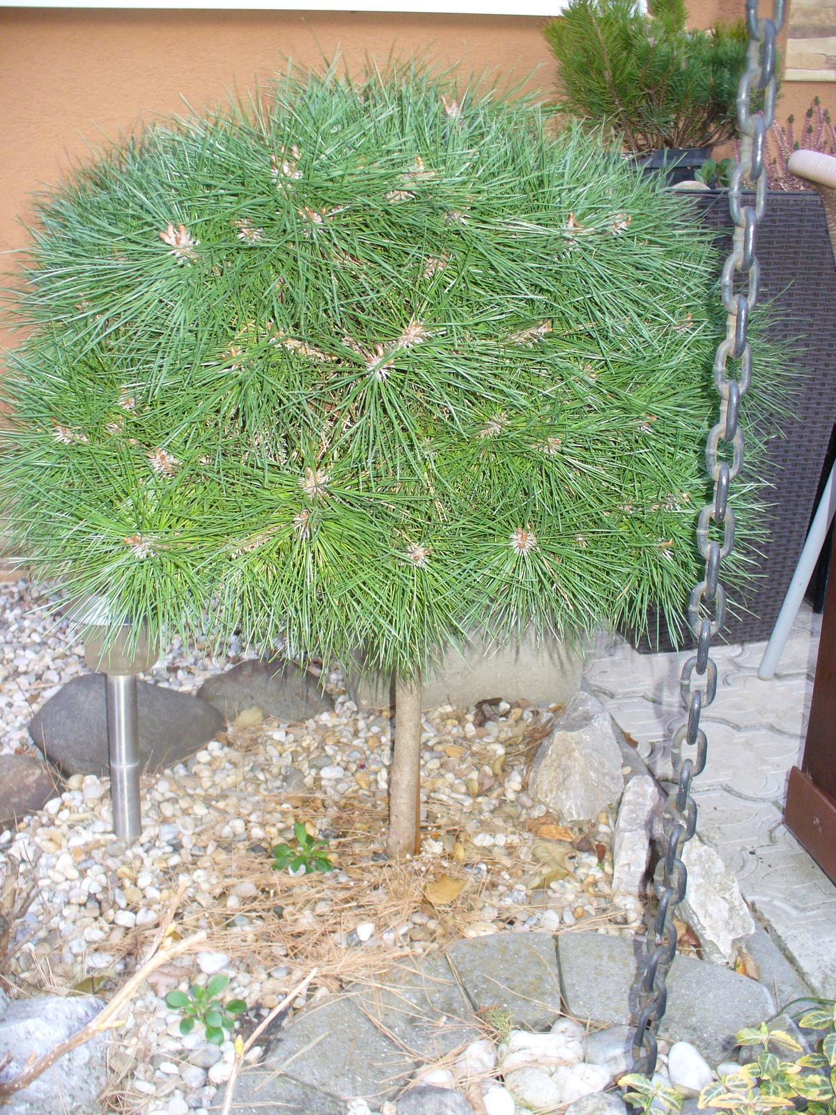 Prerábka, sadenie a úpravy v našej mini záhradke. - rastie, rastie ako divé
