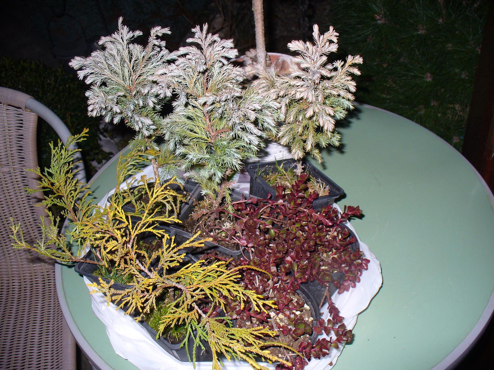 Prerábka, sadenie a úpravy v našej mini záhradke. - nákup - 7 kusov