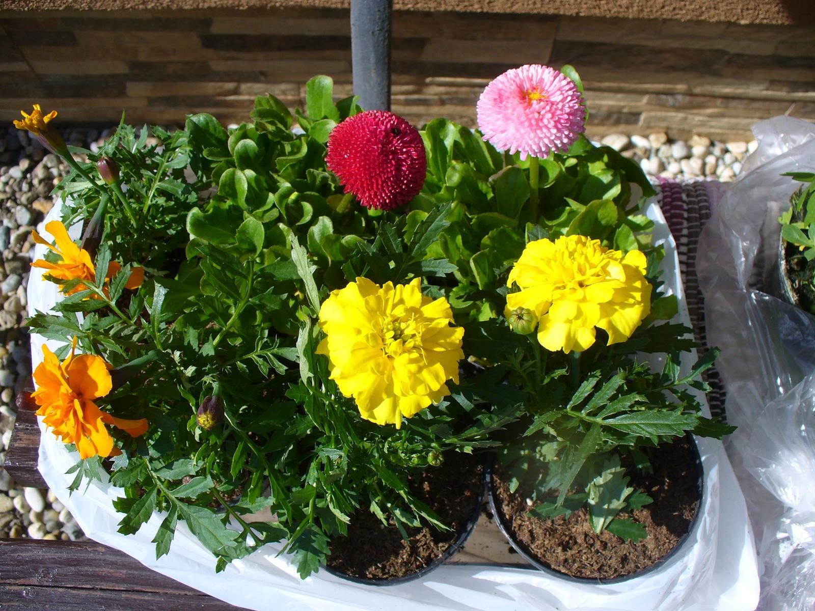 Prerábka, sadenie a úpravy v našej mini záhradke. - posadila som kade tade