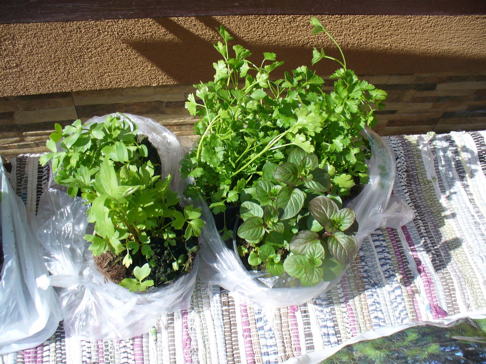 Prerábka, sadenie a úpravy v našej mini záhradke. - a už aj bylinky