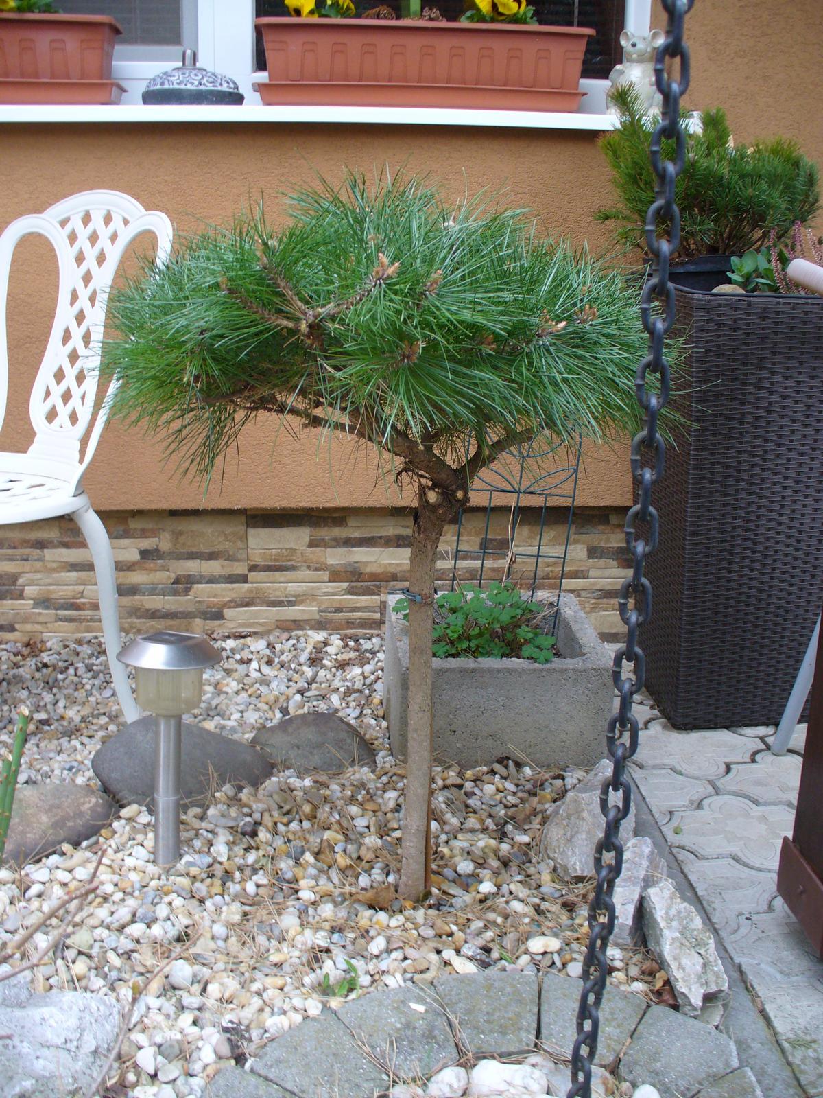 Prerábka, sadenie a úpravy v našej mini záhradke. - vystrihala som