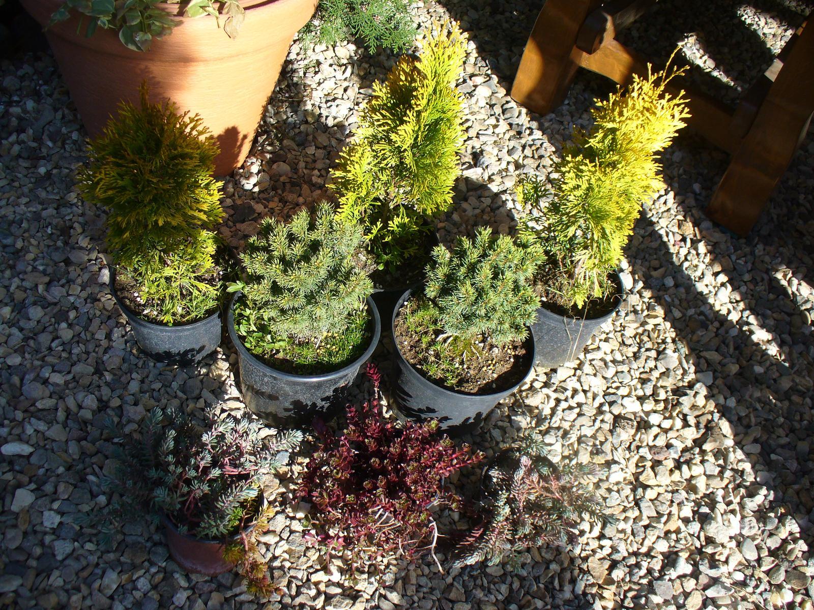 Prerábka, sadenie a úpravy v našej mini záhradke. - sobota - nákup