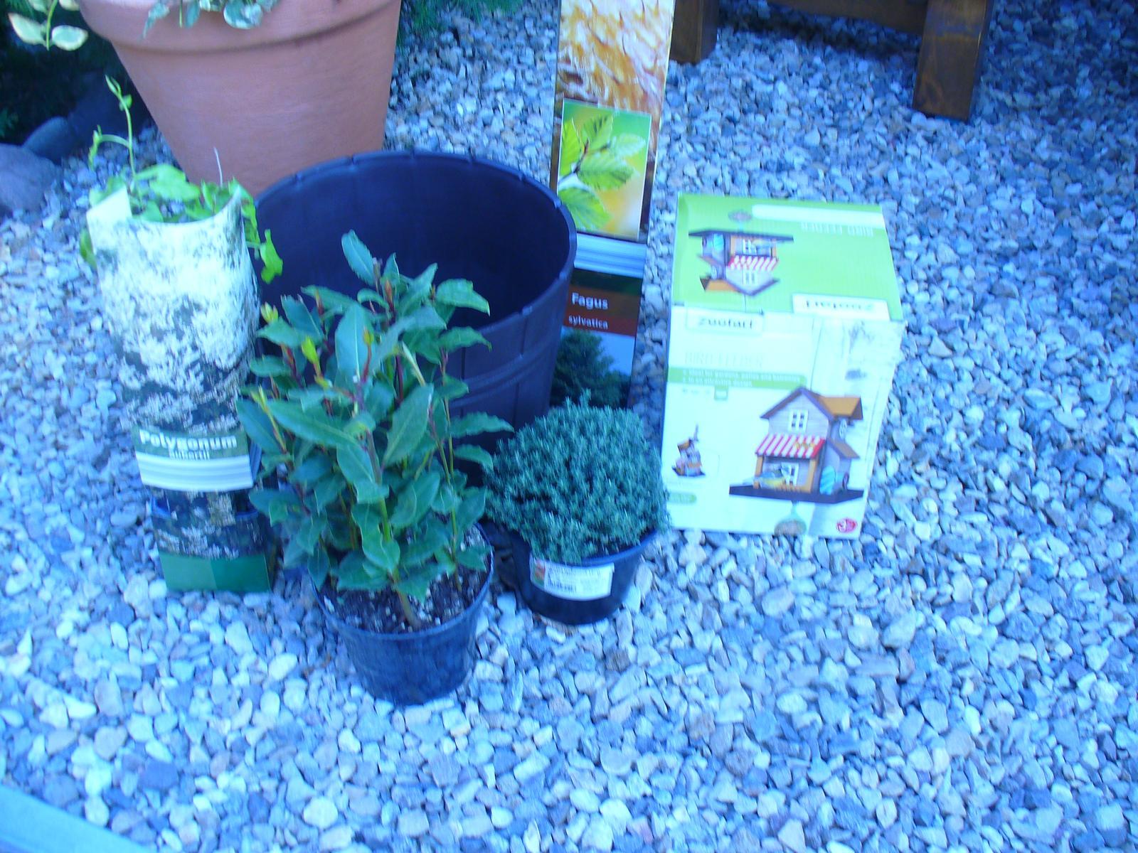 Prerábka, sadenie a úpravy v našej mini záhradke. - Nedeľa - nákup