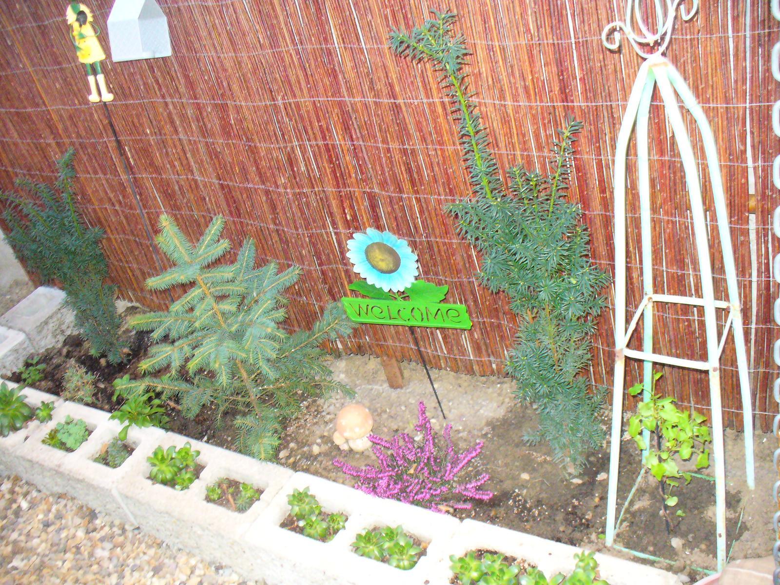 Prerábka, sadenie a úpravy v našej mini záhradke. - posadené