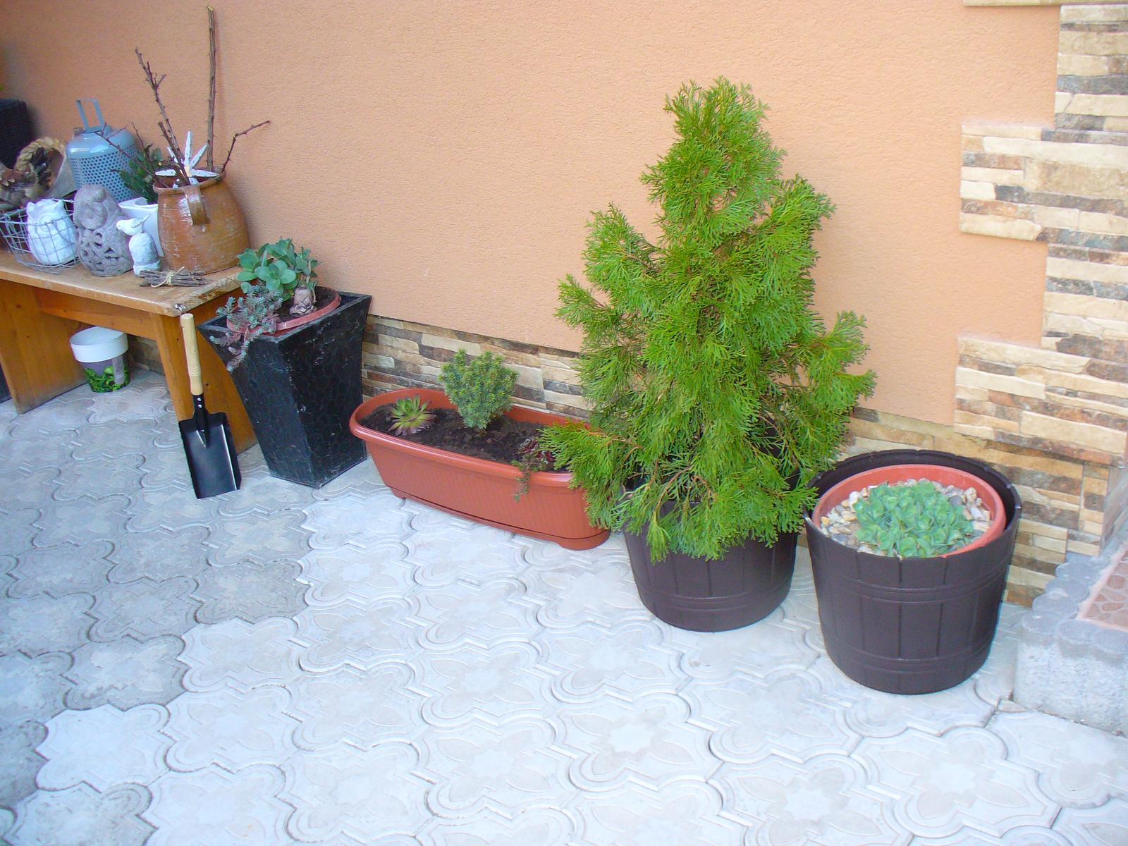 Prerábka, sadenie a úpravy v našej mini záhradke. - Obrázok č. 49