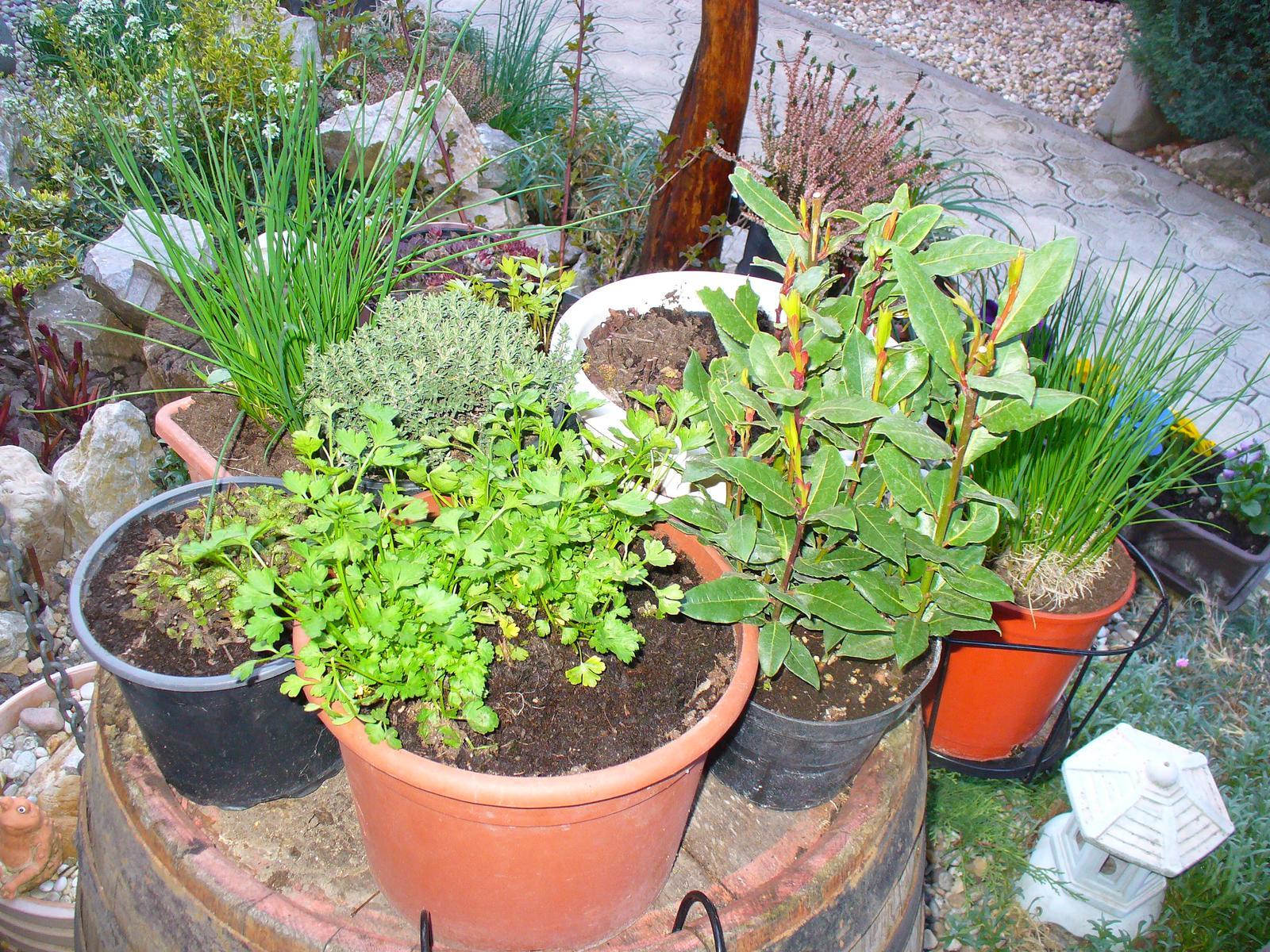 Prerábka, sadenie a úpravy v našej mini záhradke. - Moje bylinkovo
