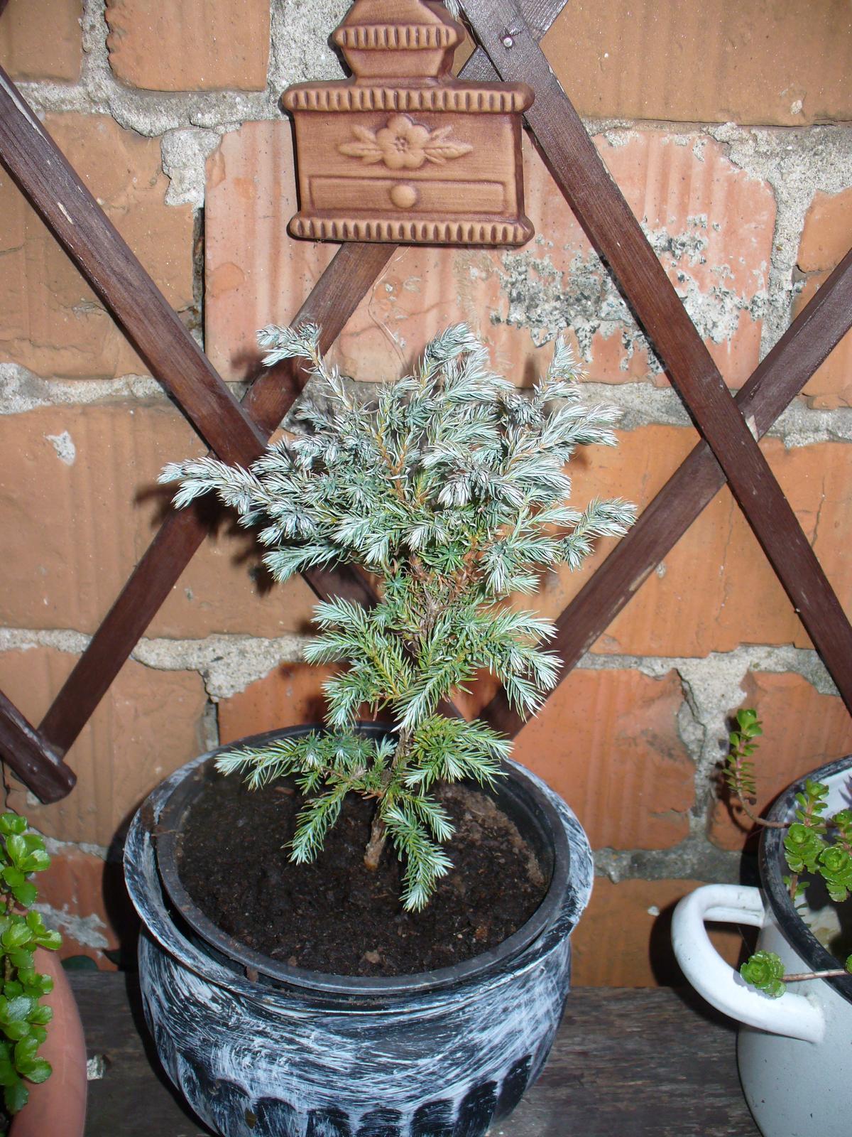 Prerábka, sadenie a úpravy v našej mini záhradke. - Obrázok č. 53