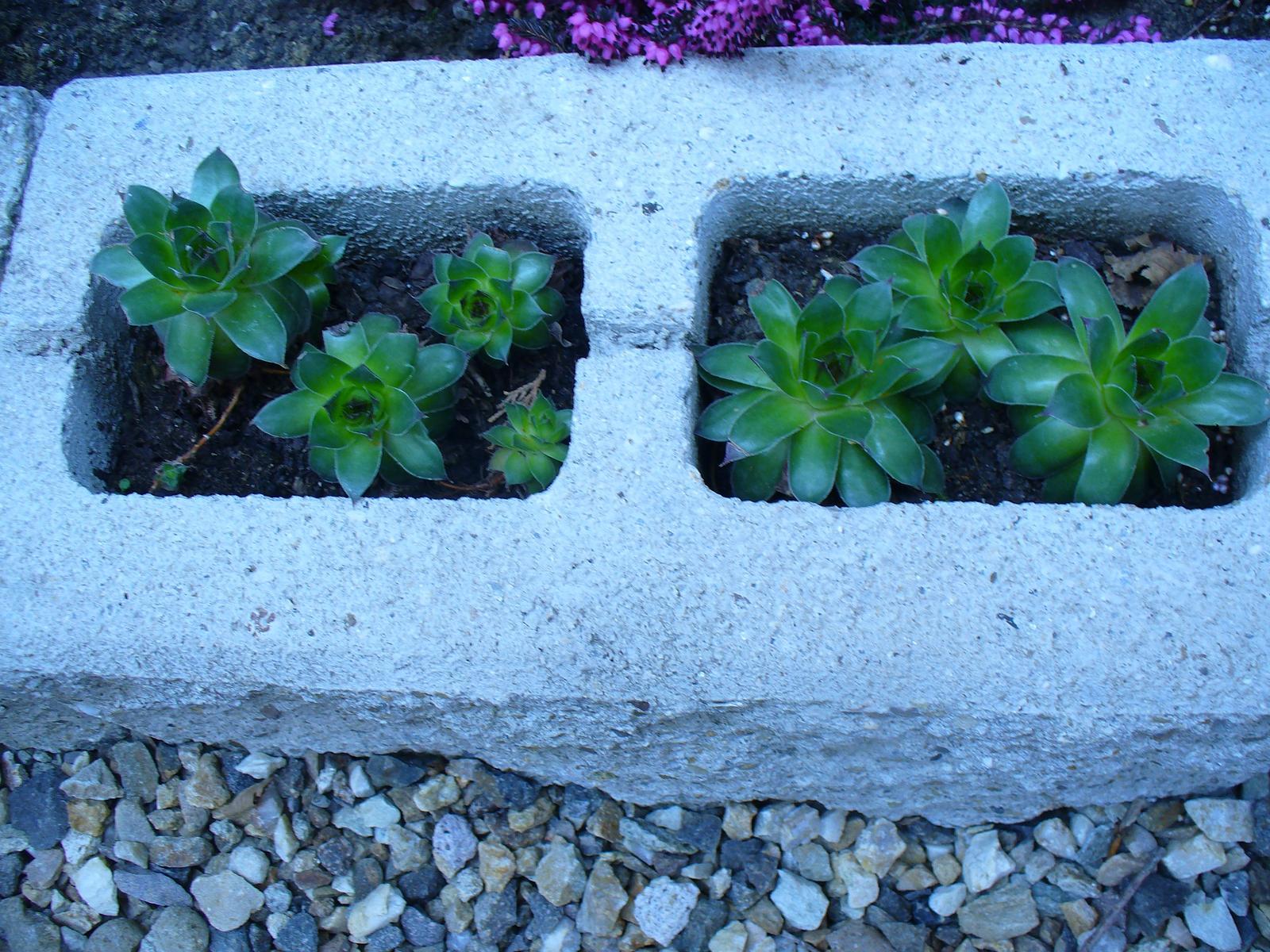 Prerábka, sadenie a úpravy v našej mini záhradke. - Obrázok č. 55