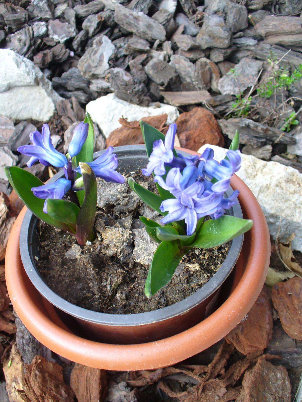 Prerábka, sadenie a úpravy v našej mini záhradke. - Obrázok č. 59
