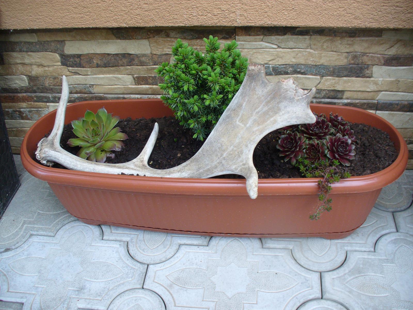 Prerábka, sadenie a úpravy v našej mini záhradke. - Obrázok č. 69