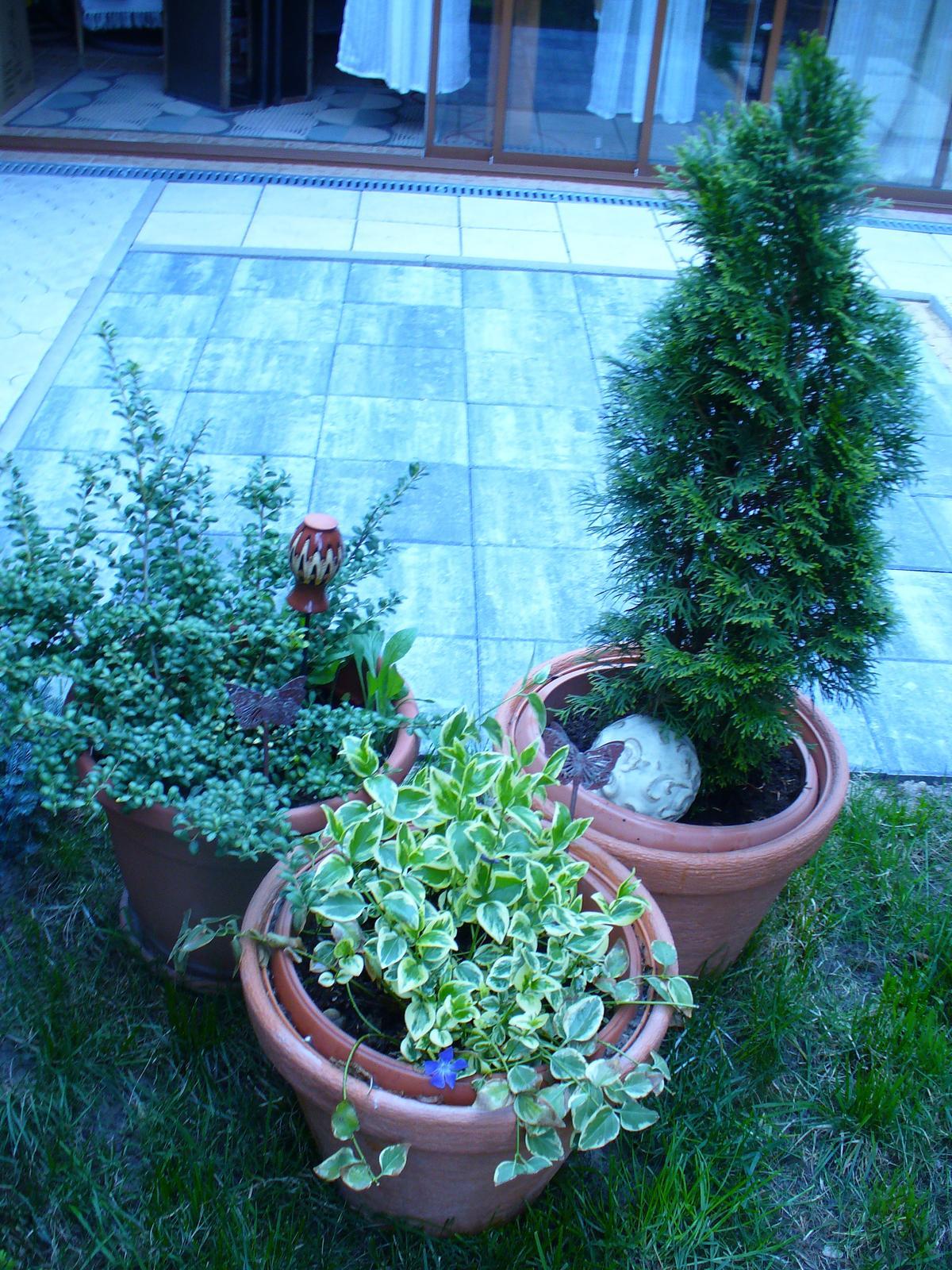 Prerábka, sadenie a úpravy v našej mini záhradke. - Obrázok č. 74