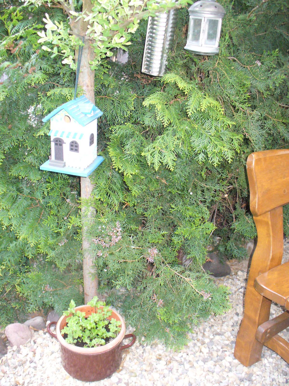 Prerábka, sadenie a úpravy v našej mini záhradke. - starý hrniec a srnčia forma