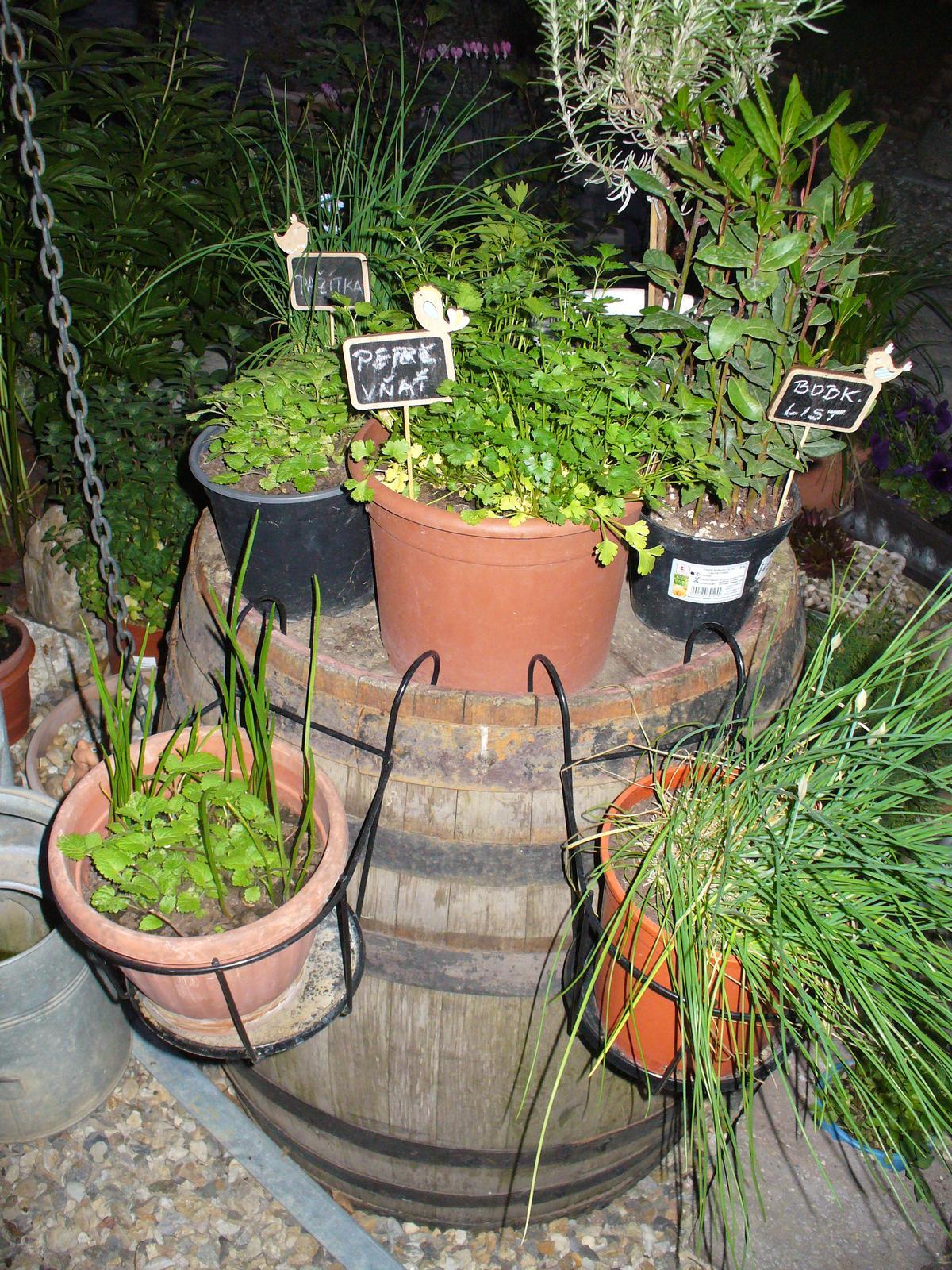 Prerábka, sadenie a úpravy v našej mini záhradke. - Môj bylinkový sud.