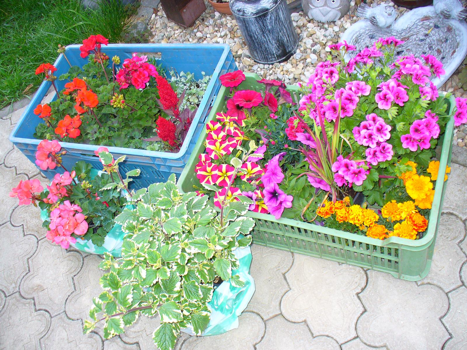 Prerábka, sadenie a úpravy v našej mini záhradke. - boli sme na kvietky do hrantíkov a závesných kvetináčov
