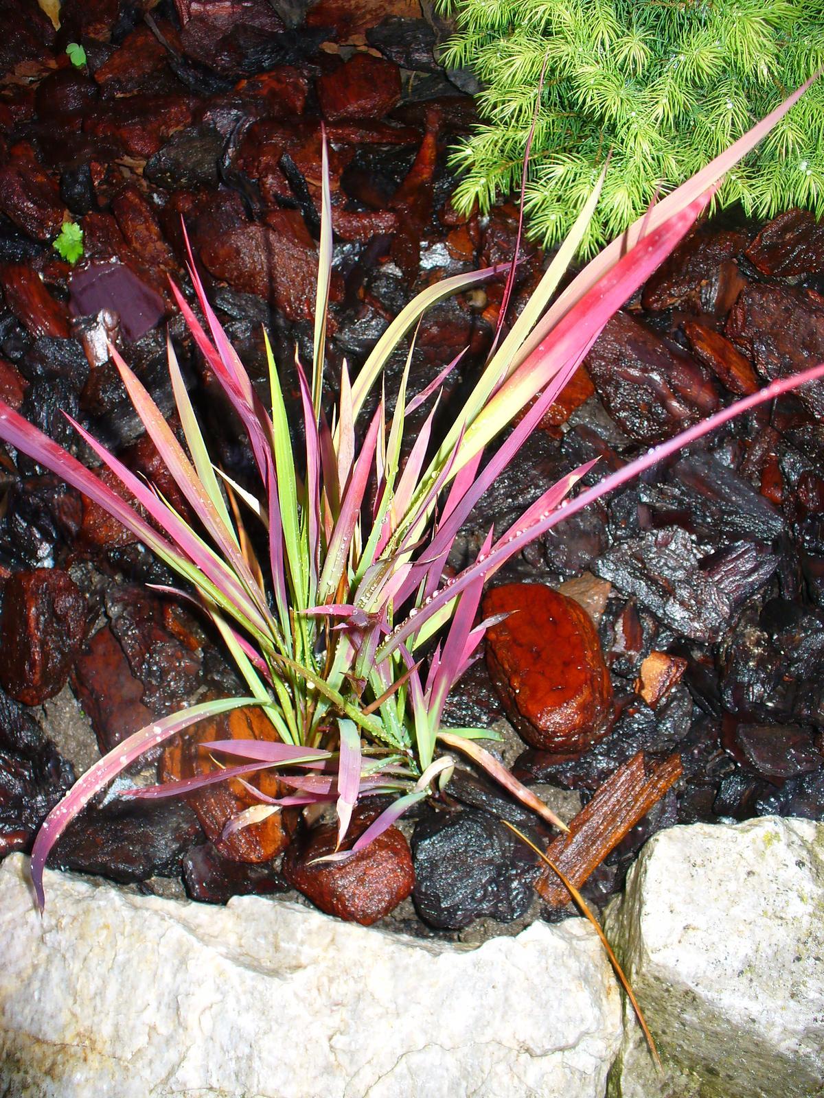 Prerábka, sadenie a úpravy v našej mini záhradke. - Červená tráva