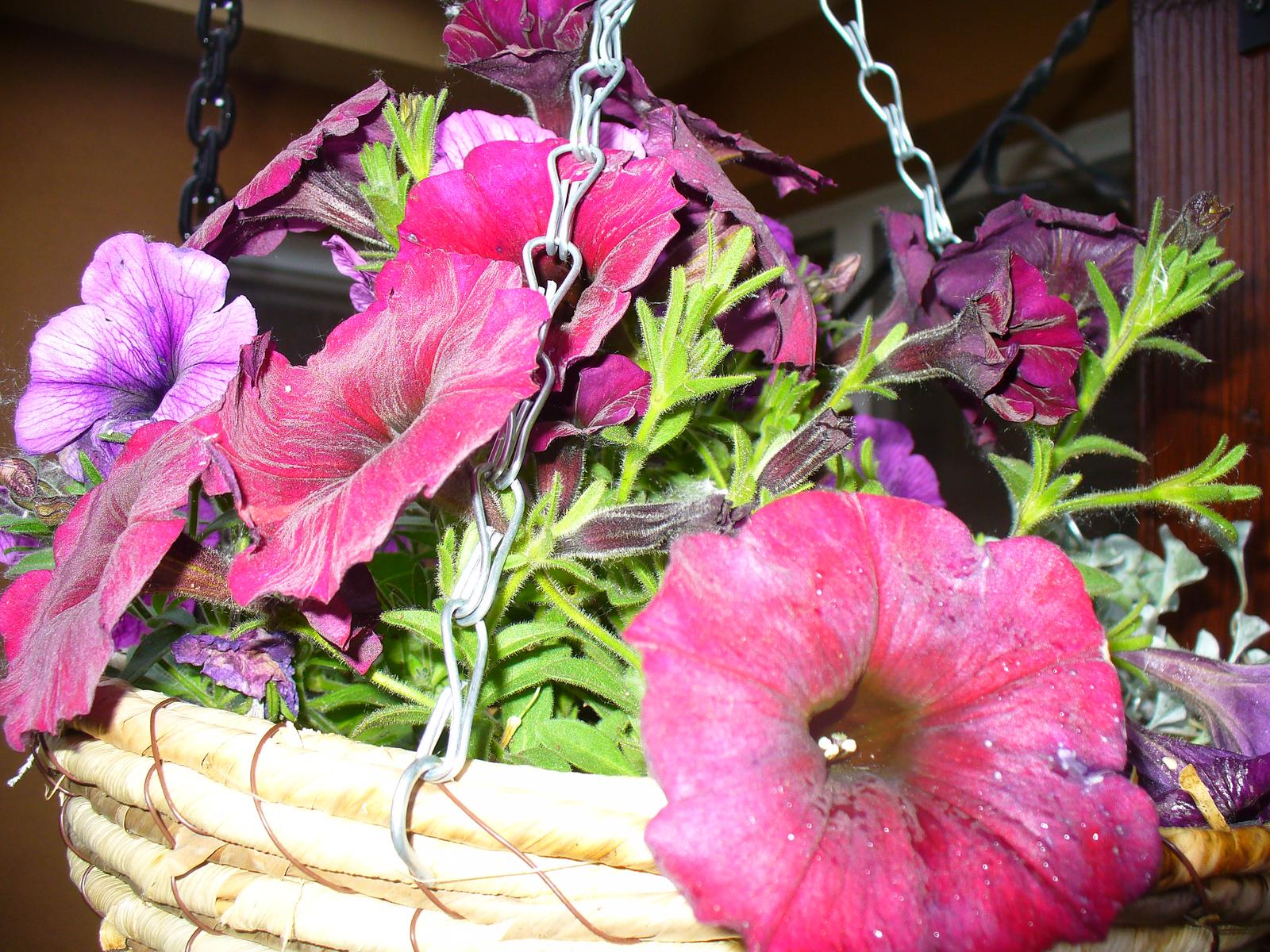Prerábka, sadenie a úpravy v našej mini záhradke. - Obrázok č. 93