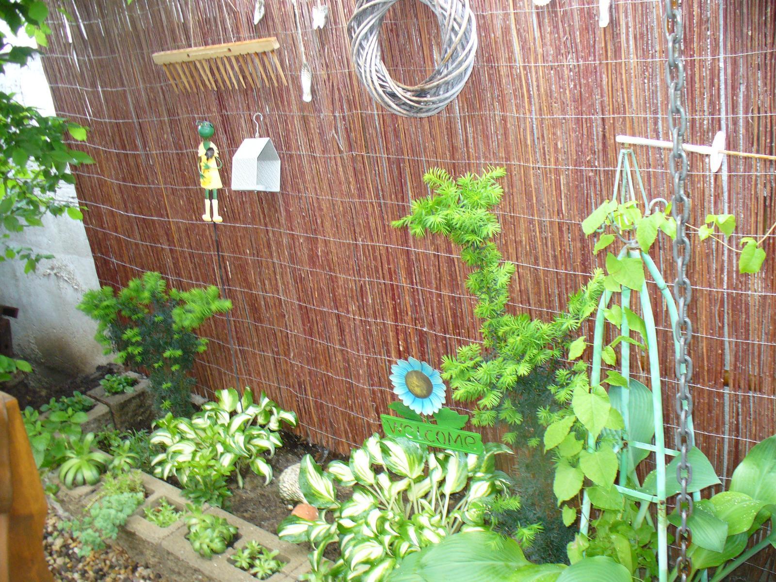 Prerábka, sadenie a úpravy v našej mini záhradke. - Obrázok č. 100