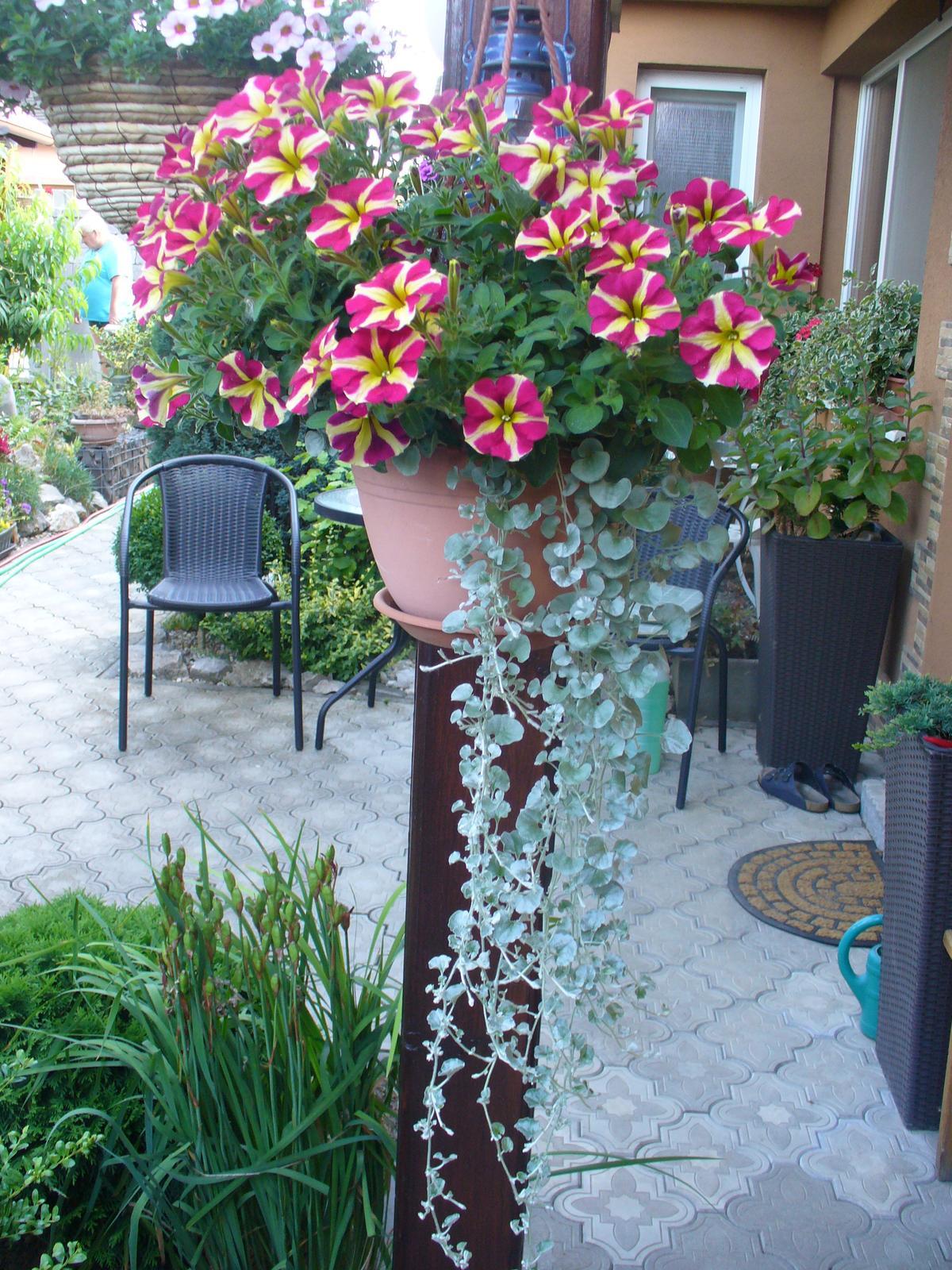 Prerábka, sadenie a úpravy v našej mini záhradke. - Obrázok č. 143