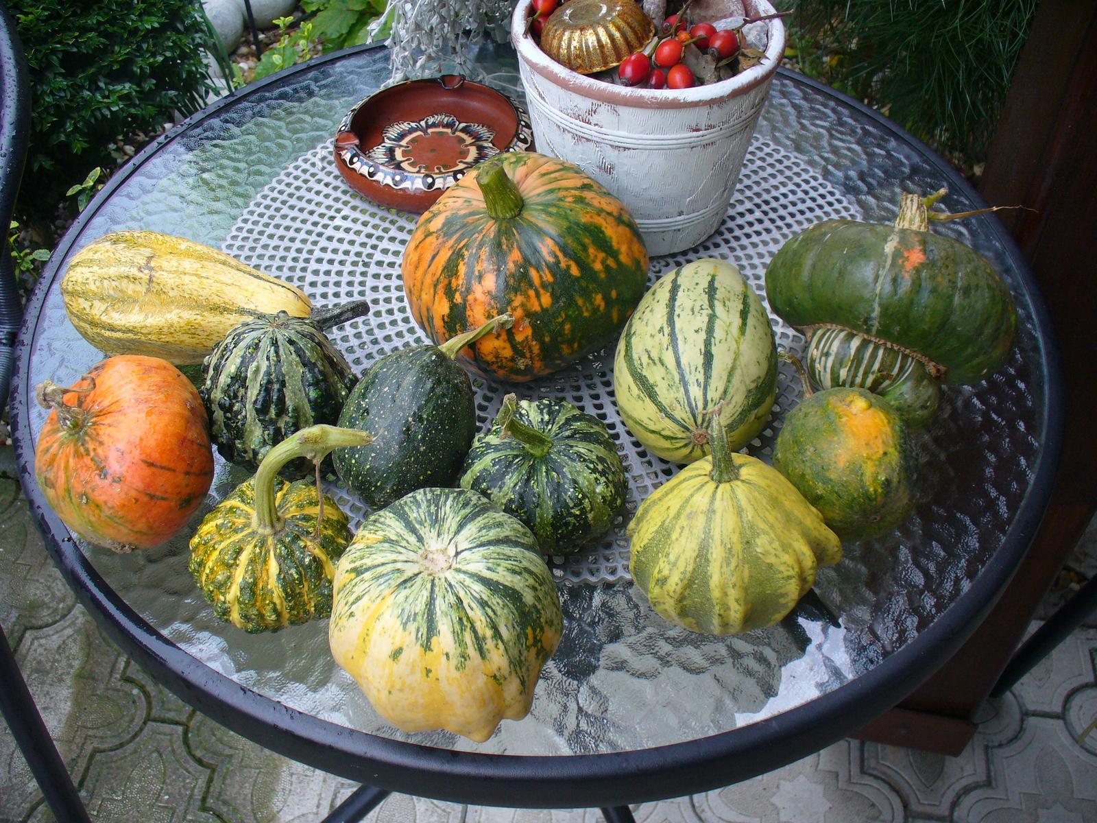 Prerábka, sadenie a úpravy v našej mini záhradke. - dostala som od susedky
