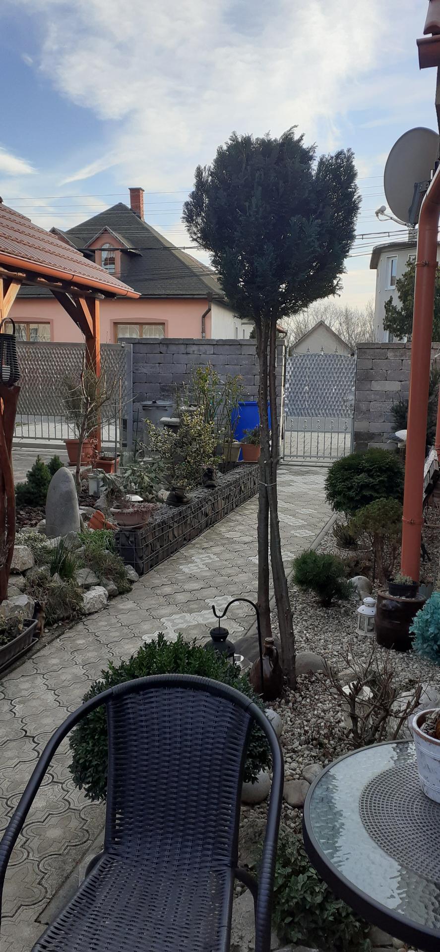 Vitajte v našej záhradke rok 2020 :) - Obrázok č. 9