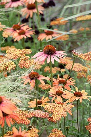 Inšpirujúce trvalkové záhony a iné výsadby - echinacea, achillea