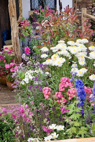 Inšpirujúce trvalkové záhony a iné výsadby - Delphinium, phlox paniculaata, leucanthemum, digitalis anemone, dahlia,