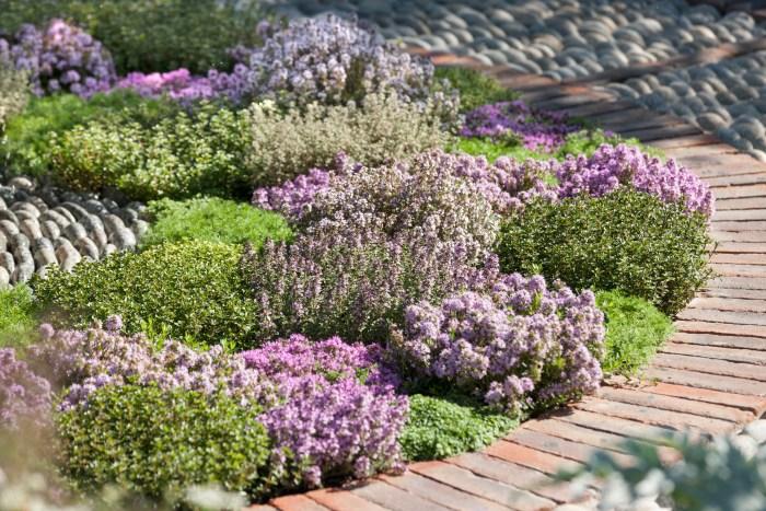 Inšpirujúce trvalkové záhony a iné výsadby - thymus, rôzne kultivary