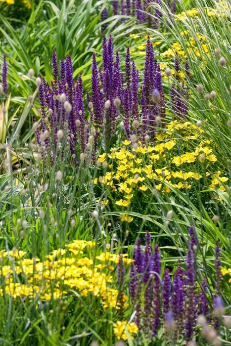 Inšpirujúce trvalkové záhony a iné výsadby - linum flavum, salvia, okrasné trávy