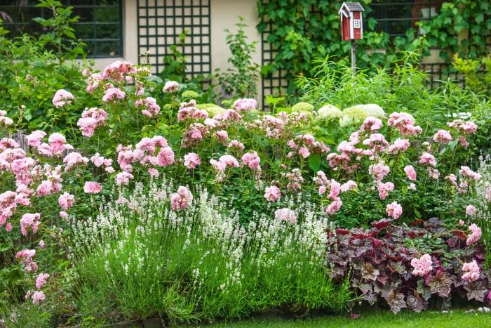 Inšpirujúce trvalkové záhony a iné výsadby - ruže, biela levanduľa, heuchera
