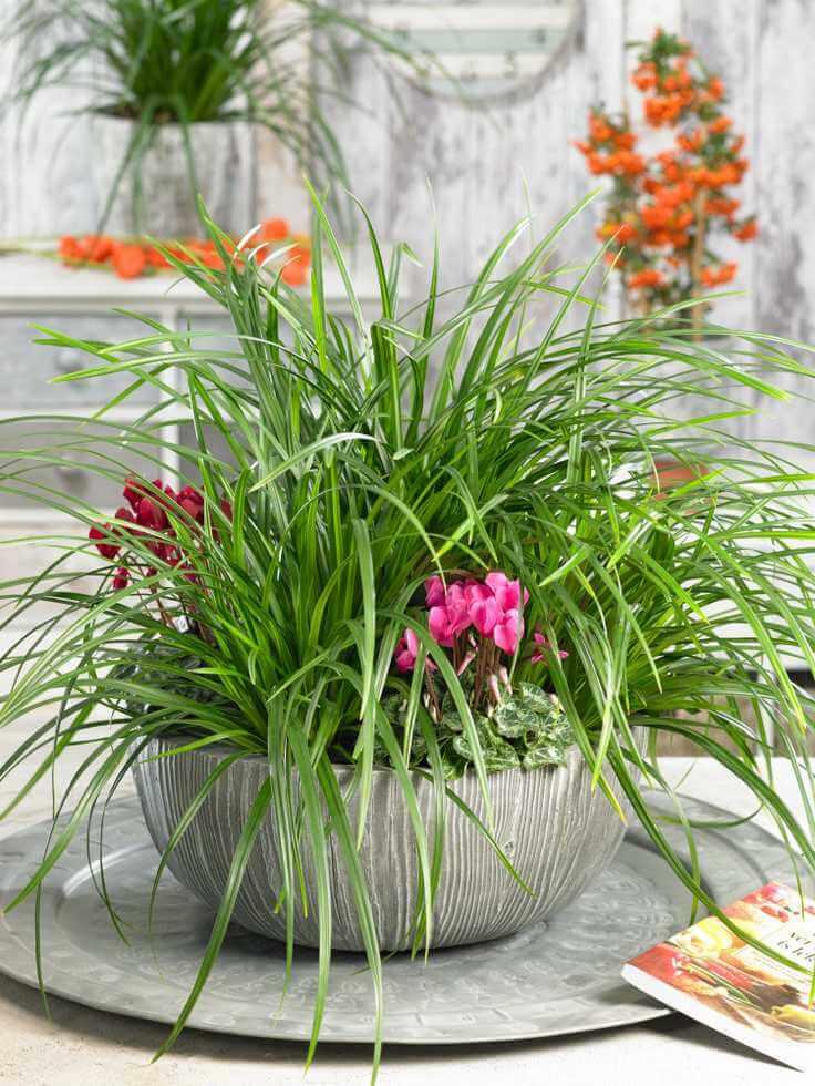 Novinky pre jar 2021 - Carex Irish Green