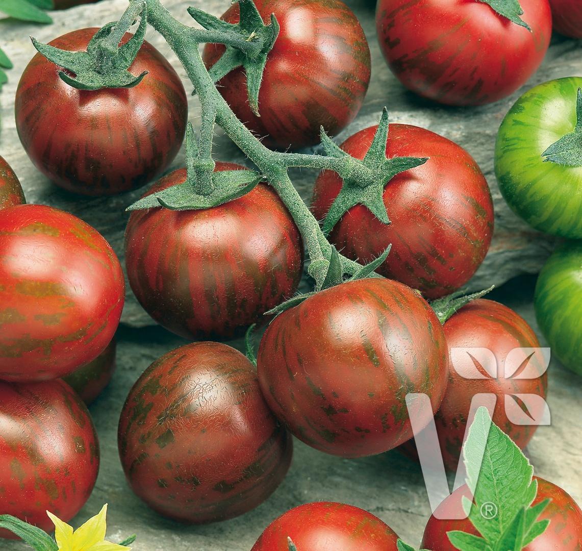 Zelenina zo záhradky - Zebrino F1