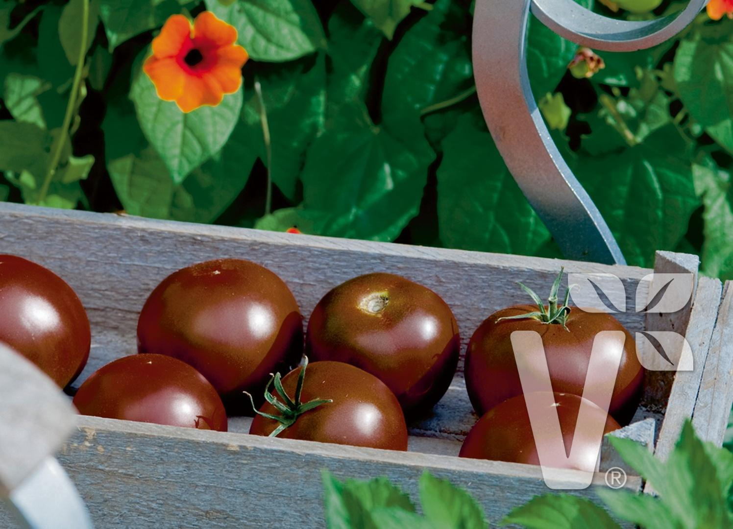 Zelenina zo záhradky - Kakao F1
