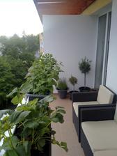 jahody, medovka, mata, levadula a olivy...prijemna balkonova splocnost :)