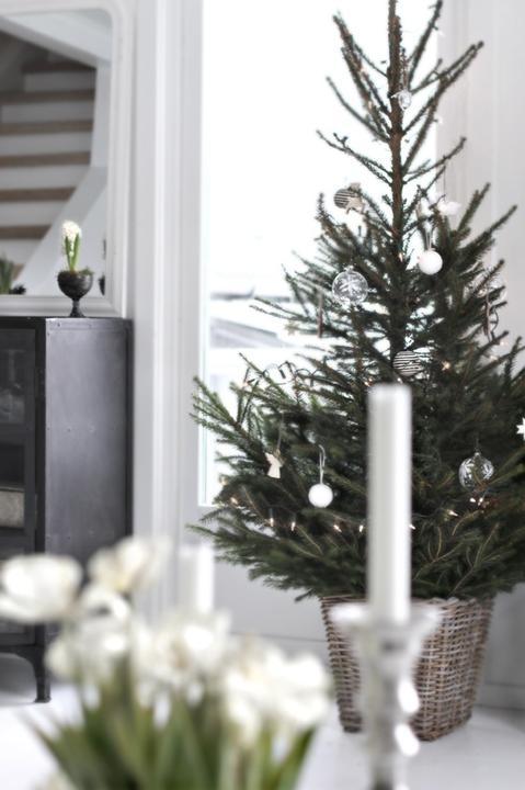 ******christmas tree****** - Obrázok č. 9