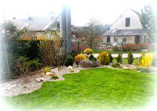 třetím rokem vytvořený ostrůvek kolem plotu,zatím ve fázi probouzení..už se těším na květěn :-)
