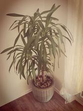jukka dostala nový květináč