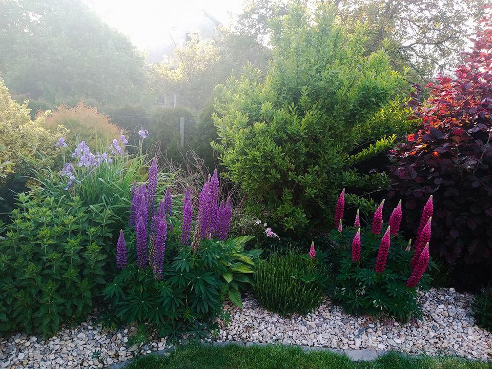 Zahrada - Obrázek č. 75